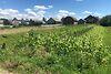 Земля под жилую застройку в селе Хриплин, площадь 10 соток фото 6