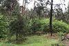 Земля под жилую застройку в селе Забучье, площадь 30 соток фото 3