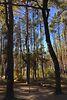 Земля под жилую застройку в селе Колонщина, площадь 25 соток фото 2