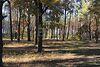 Земля под жилую застройку в селе Колонщина, площадь 25 соток фото 4