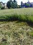 Земля под жилую застройку в селе Людвиновка, площадь 13 соток фото 4
