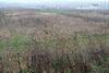 Земля под жилую застройку в селе Новоселки, площадь 17 соток фото 4