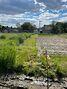 Земля под жилую застройку в селе Севериновка, площадь 15 соток фото 4