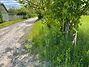 Земля под жилую застройку в селе Севериновка, площадь 15 соток фото 5