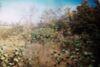 Земля под жилую застройку в Мостиске, район Мостиска, площадь 67 соток фото 2