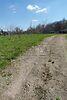 Земля под жилую застройку в селе Великие Дмитровичи, площадь 68 соток фото 4