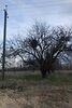 Земля под жилую застройку в селе Великие Дмитровичи, площадь 12 соток фото 2