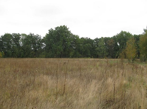 Земля под жилую застройку в селе Ковалевка, площадь 25 соток фото 1