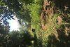 Земля под жилую застройку в селе Горыньград Первый, площадь 25 соток фото 5