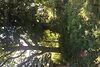 Земля под жилую застройку в селе Горыньград Первый, площадь 25 соток фото 6