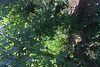 Земля под жилую застройку в селе Горыньград Первый, площадь 25 соток фото 7