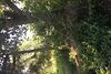 Земля под жилую застройку в селе Горыньград Первый, площадь 25 соток фото 8