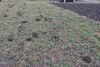 Земля под жилую застройку в селе Ангеловка, площадь 15 соток фото 6