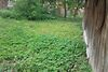 Земля под жилую застройку в селе Березовица, площадь 19 соток фото 2