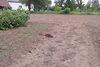 Земля под жилую застройку в селе Березовица, площадь 19 соток фото 6
