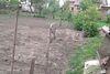 Земля под жилую застройку в селе Березовица, площадь 19 соток фото 7