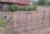 Земля под жилую застройку в селе Березовица, площадь 19 соток фото 8