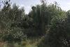 Земля под жилую застройку в селе Ивачев Долишний, площадь 30 соток фото 4