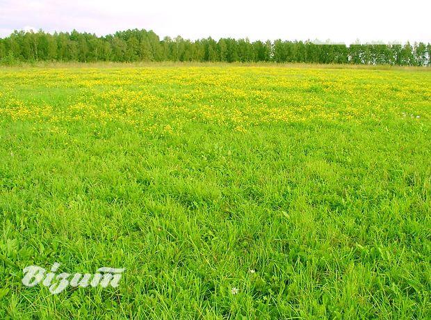 Земля под жилую застройку в селе Петриков, площадь 25 соток фото 1