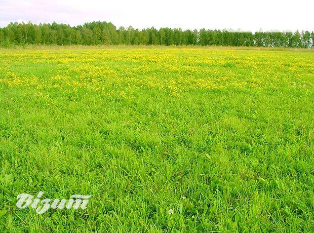 Земля под жилую застройку в селе Подгородное, площадь 25 соток фото 2