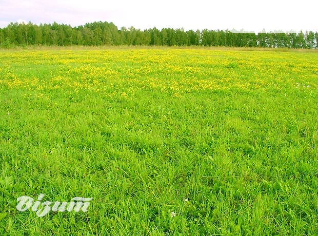 Земля под жилую застройку в селе Шляхтинци, площадь 12 соток фото 2