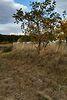 Земля под жилую застройку в селе Великие Бирки, площадь 15 соток фото 6