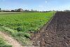 Земля под жилую застройку в селе Великие Гаи, площадь 21 сотка фото 2