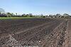 Земля под жилую застройку в селе Великие Гаи, площадь 21 сотка фото 4