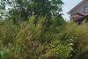 Земля под жилую застройку в Ужгороде, район БАМ, площадь 9 соток фото 1
