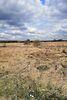 Земля под жилую застройку в селе Якушинцы, площадь 12 соток фото 2