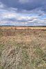 Земля под жилую застройку в селе Якушинцы, площадь 12 соток фото 4