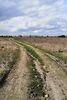 Земля под жилую застройку в селе Якушинцы, площадь 12 соток фото 5