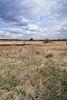 Земля под жилую застройку в селе Якушинцы, площадь 12 соток фото 6