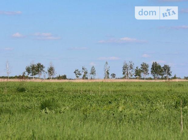 Продаж землі сільськогосподарського призначення, Київська, Бориспіль, c.Рогозів