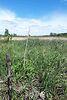 Земля сельскохозяйственного назначения в селе Бабинцы, площадь 9 соток фото 6