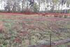 Земля сельскохозяйственного назначения в Бородянке, район Красный Рог, площадь 12 соток фото 4