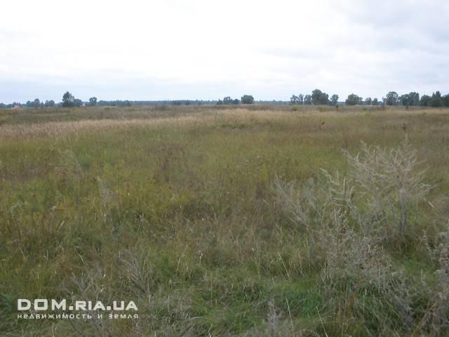 Продажа земли сельскохозяйственного назначения, Киевская, Бровары, c.Зазимья