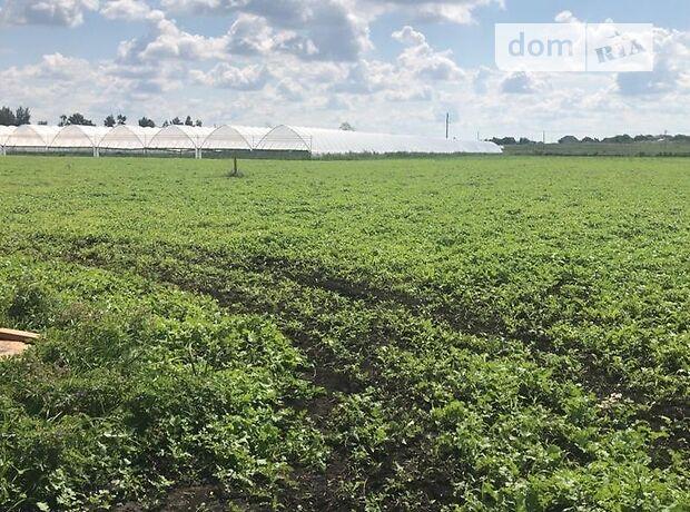 Земля сельскохозяйственного назначения в селе Ставище, площадь 20 Га фото 1