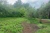 Земля сельскохозяйственного назначения в Черновцах, район Роша, площадь 4 сотки фото 2
