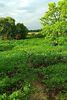 Земля сільськогосподарського призначення в селі Шрамківка, площа 12 соток фото 5