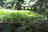 Земельный участок сельскохозяйственного назначения в Драгобрате, площадь 12 соток фото 4
