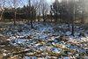 Земля сільськогосподарського призначення в селі Сокільники, площа 17 соток фото 1