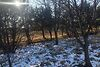 Земля сільськогосподарського призначення в селі Сокільники, площа 17 соток фото 5