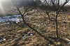 Земля сільськогосподарського призначення в селі Сокільники, площа 17 соток фото 6