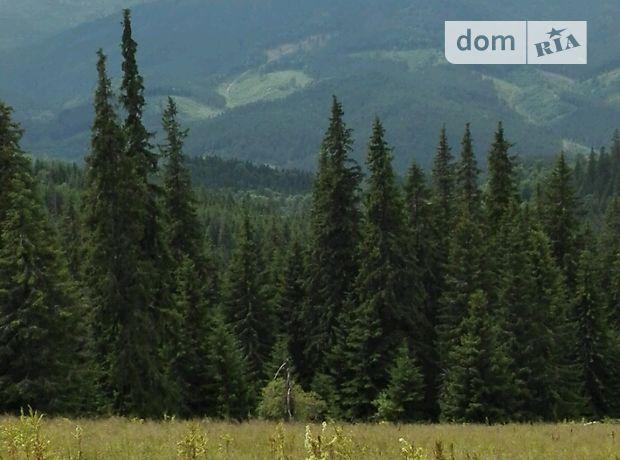 Земля сельскохозяйственного назначения в селе Черная Тиса, площадь 0.12 соток фото 1