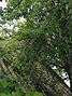 Земля сельскохозяйственного назначения в Сумах, район Аэропорт, площадь 4 сотки фото 4