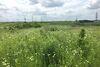 Земля сельскохозяйственного назначения в селе Била, площадь 10 соток фото 5