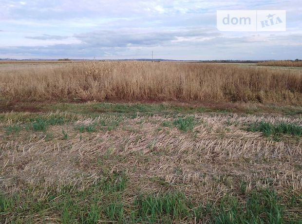 Земля сельскохозяйственного назначения в селе Романовка, площадь 25 соток фото 1