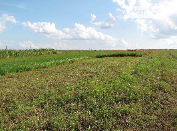 Земля сельскохозяйственного назначения в селе Великие Бирки, площадь 16 соток фото 1