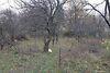 Земля сельскохозяйственного назначения в Ужгороде, район Горяны, площадь 6 соток фото 3